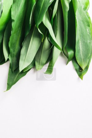 Photo for Bunch of Fresh Green Rams Onion or Ramsoms, A big ingredient in the New Nordic Culinary Arts and cuisine - Royalty Free Image