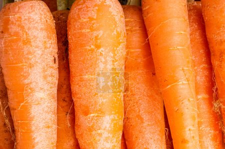 Photo for Bunch of Organic Carrots with Leaves. Close up and Macro, Background - Royalty Free Image