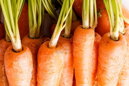 Bunch of Carrots , close up and macro