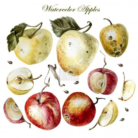 watercolor set with apples on a white background