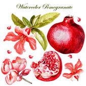 Akvarell Beautiful gyümölcsök és virágok, a gránátalma szett