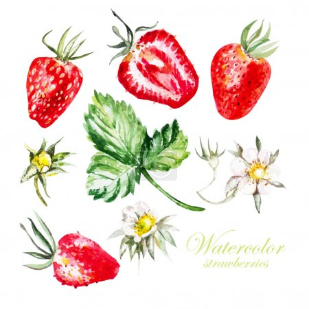 Illustration pour Ensemble avec des baies et des fleurs de fraise. Vecteur - image libre de droit