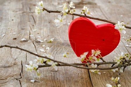 Foto de Forma de corazón rojo hecha de madera con ramas en flor de ciruela sobre un fondo rústico de madera, símbolo de amor para el día de San Valentín o el día de las madres - Imagen libre de derechos