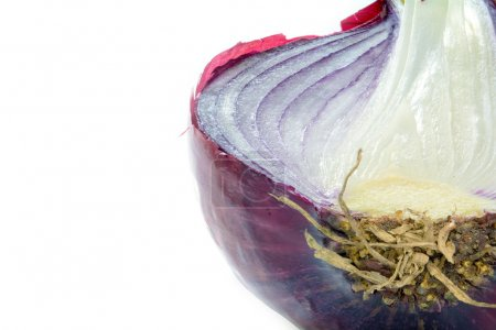 Photo for Half red onion, close up shot isolated on a white background - Royalty Free Image