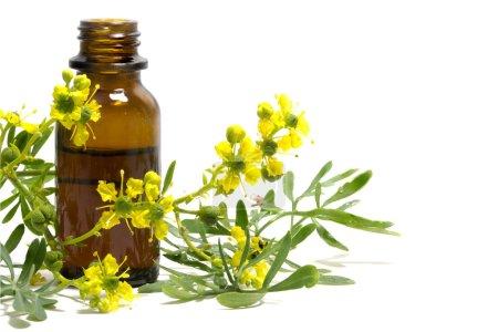 Photo pour Rue (Ruta graveolens), branche fleurie et bouteille d'huile essentielle isolée sur fond blanc, vieille plante médicinale - image libre de droit