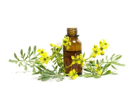 Photo pour Rue (Ruta graveolens), branche fleurie et bouteille d'huile essentielle isolée sur fond blanc, plante médicinale médiévale - image libre de droit
