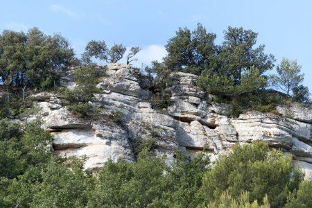 Pine trees and bushes growing on a steep rock face