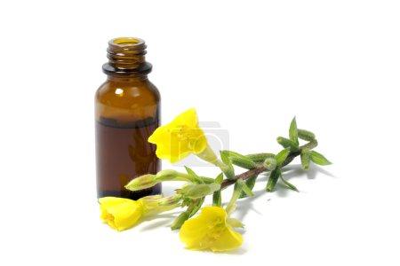 Photo pour Fleurs jaune onagre (Oenothera biennis) et une petite bouteille d'huile, produits cosmétiques et des remèdes naturels pour les peaux sensibles et l'eczéma, isolé sur fond blanc, exemple de texte - image libre de droit