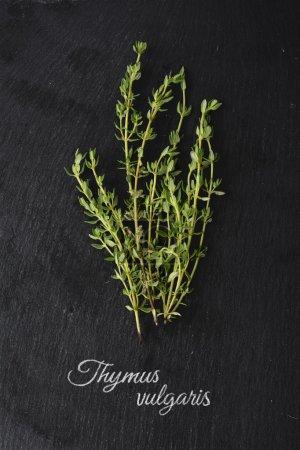 fresh green thyme on dark slate and the Latin name: Thymus vulga