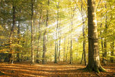Autumn forest landscape with sun rays and colorful autumn leaves