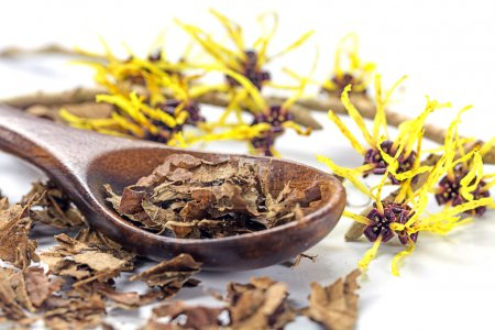 flowering witch hazel (Hamamelis) and wooden spoon with dried le