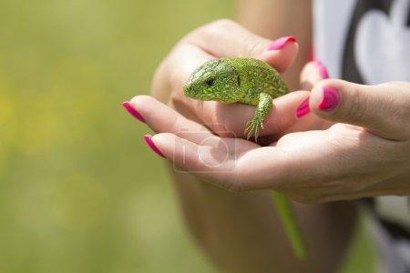 Holding a lizard