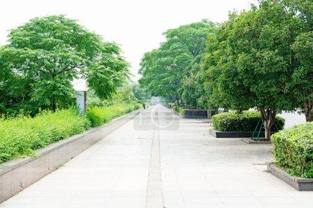 Photo pour Arbres verts dans le parc - image libre de droit