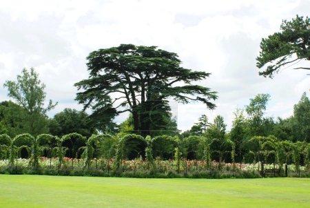 Blenheim Palace rose garden in Woodstock, Oxfordshire, England