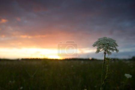 Opened hardback book diary on blurred nature background