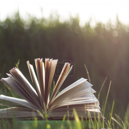 Back to school. Open hardback book with fanned pages on blurred nature background. Summer spring background with open book.  Copy Space. Education background.