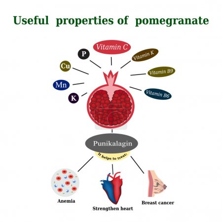 The composition of the pomegranate. Useful properties of pomegranate. Garnet treats anemia, supports the heart, helps with breast cancer. Vitamins. Punikalagin. Vector illustration