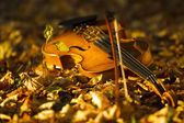 Violin lying on the fallen leaves