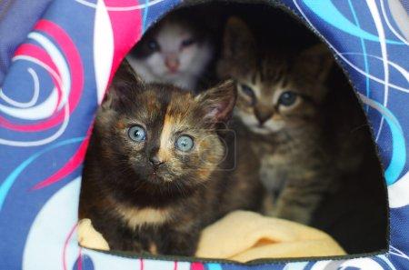Kittens hiding in their den