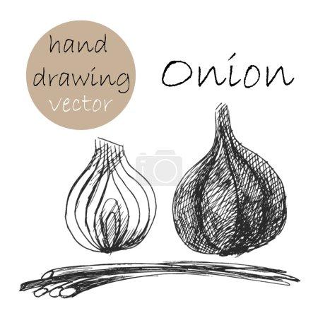 Hand Drawn onion. Monochrome sketch. Vector illustration.