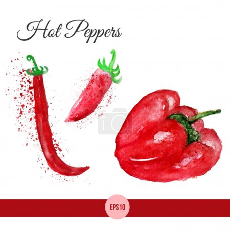 Vector watercolor set of bright red chili peppers isolated on white. EPS10
