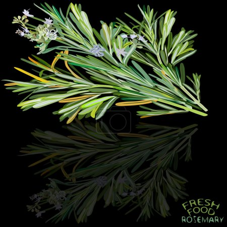 An illustration of three rosemary stems in variety...