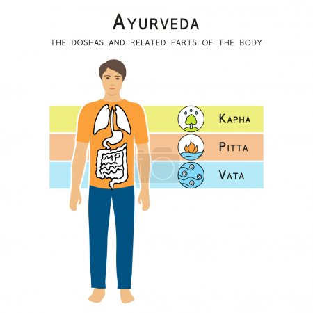 Illustration for Ayurveda vector illustration. Ayurveda doshas. The doshas and related parts of the body. Ayurvedic infographic. Alternative medicine. Indian medicine. - Royalty Free Image