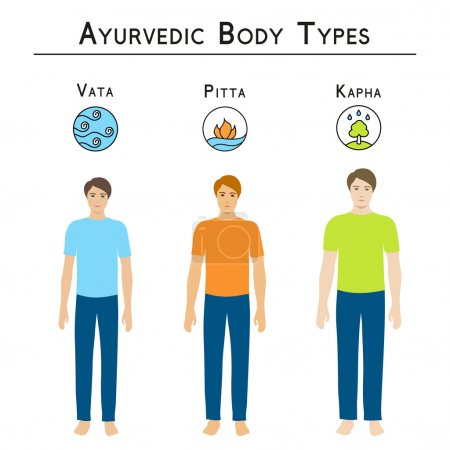Illustration for Ayurveda vector illustration. Ayurveda doshas. Ayurvedic body types, vata, pitta, kapha. Infographic with man body types. Alternative medicine. Indian medicine. - Royalty Free Image