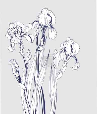 Illustration for Sketch of blossoming irises. ?lement for your design. Vector illustration - Royalty Free Image