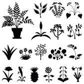 Set of stylized houseplants' silhouettes