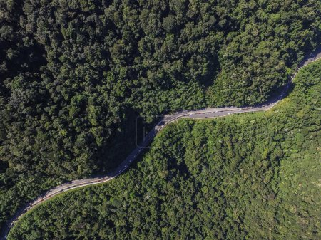 Highway in a Forest, Brazil
