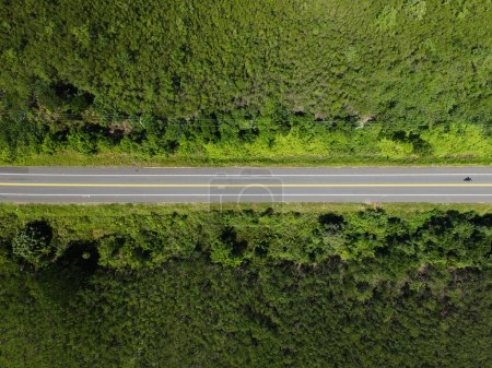 Photo for Top View of Rural Road in rainforest - Royalty Free Image