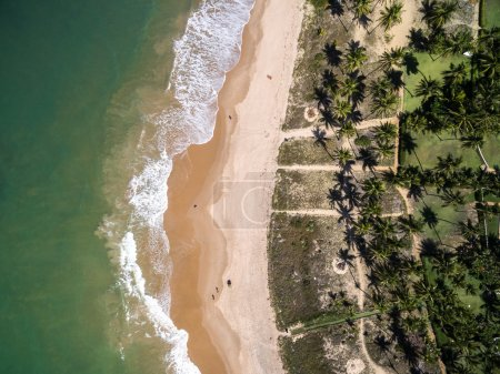 Photo for Top View of a Paradise Beach with Palm Trees - Royalty Free Image
