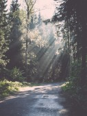 forest road with sun rays in the morning - retro, vintage