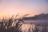 Blurred water grass on the foggy morning  - vintage effect