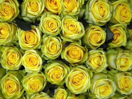 Photo pour Gros plan sur le bouquet de fleurs roses jaunes sur fond blanc - image libre de droit