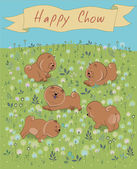 Happy Chow-chow on the blossoming field