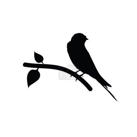 sparrow black vector