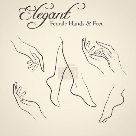 Illustration pour Ensemble de silhouettes élégantes dans un style de croquis linéaire (mains et pieds féminins). Eléments de conception pour l'industrie des soins de la peau - image libre de droit