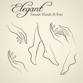 Elegant silhouettes of female hands and feet