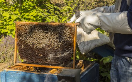Beekeeper holding a frame of honeycomb