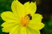Včelaάνδρας ψάχνει κάτω από το κουτί από χαρτόνι