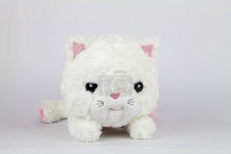 Foto de Lindo gato blanco que no come ratones. - Imagen libre de derechos