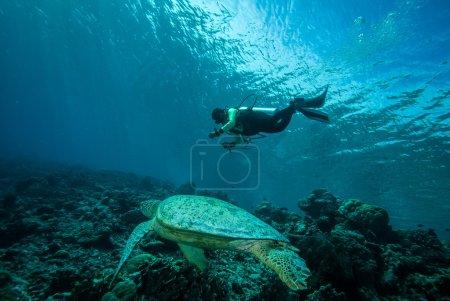 Photo pour Chelonia mydas nageant et plongeur se dirigeant vers la tortue de mer . - image libre de droit