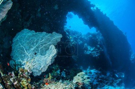 Photo pour Il y a des poissons de récif nageant près du ventilateur de la mer . - image libre de droit