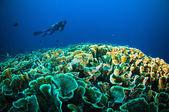 """Постер, картина, фотообои """"Подводное плавание выше коралловые ниже лодка bunaken Сулавеси Индонезия подводные фото"""""""