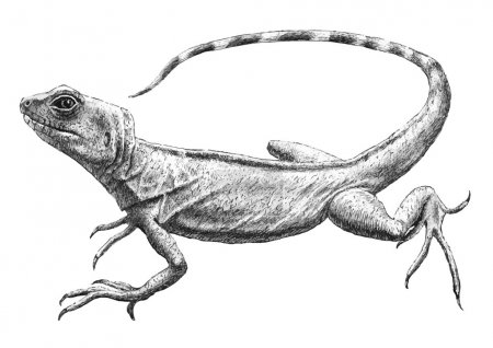 illustration with realistic lizard.