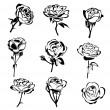 Vector illustration of  roses silhouette...