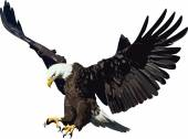 Eagle available in vector file