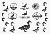 Vector Duck Logo Icons Charts and Design Elements